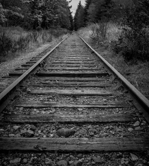 Autumn tracks BW