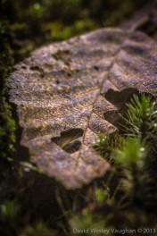 Gasping Leaf