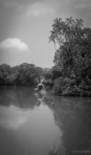 Pond Art.