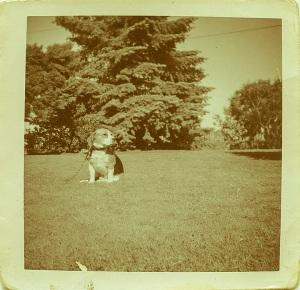 My first dog, circa 1962. Name,