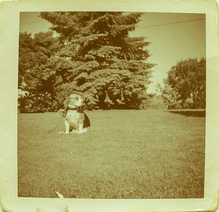 """My first dog, circa 1962. Name, """"Unknown,"""""""