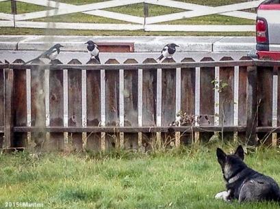 Bird watching.
