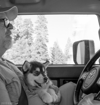 Our first 4th of July together, Shadow sat on my lap for a 14-hour drive. No howling or startled dog shivers from the display. We watched the fireworks explode over Idaho Falls, about an hour from the city as we drove.