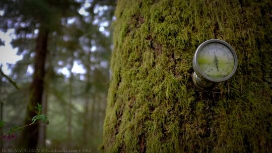 Wacky Woods, Vancouver Island, BC